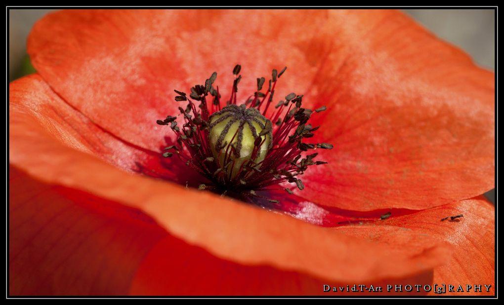 Photographe en gironde, je vous présente mes quelques travaux sur les fleurs (plan seré,macro...)