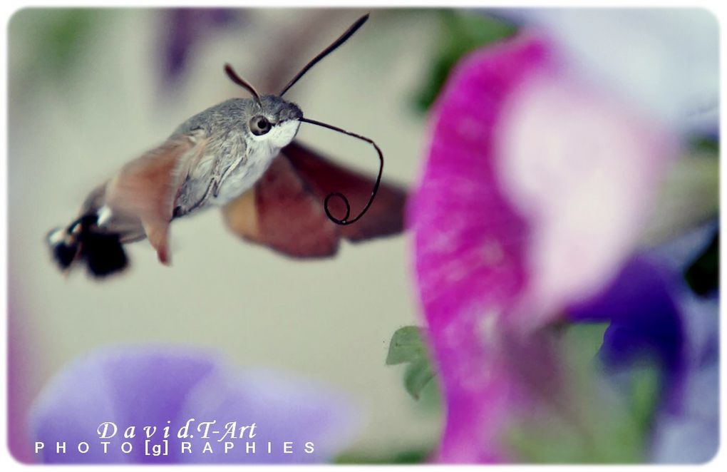 Album - insectes-animaux