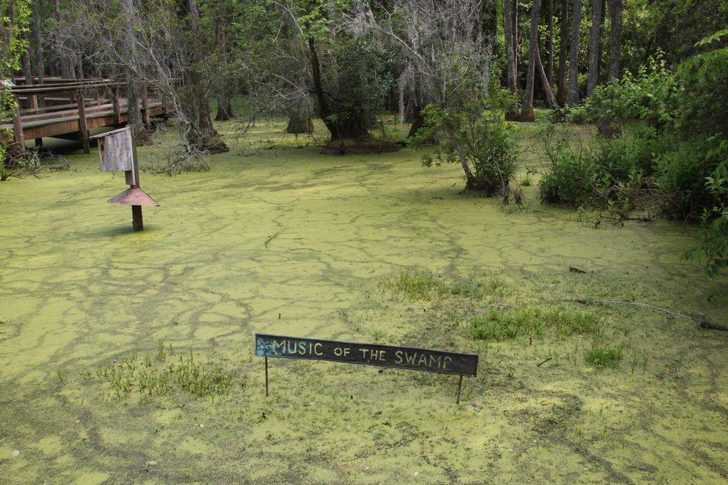 Album - Swamp