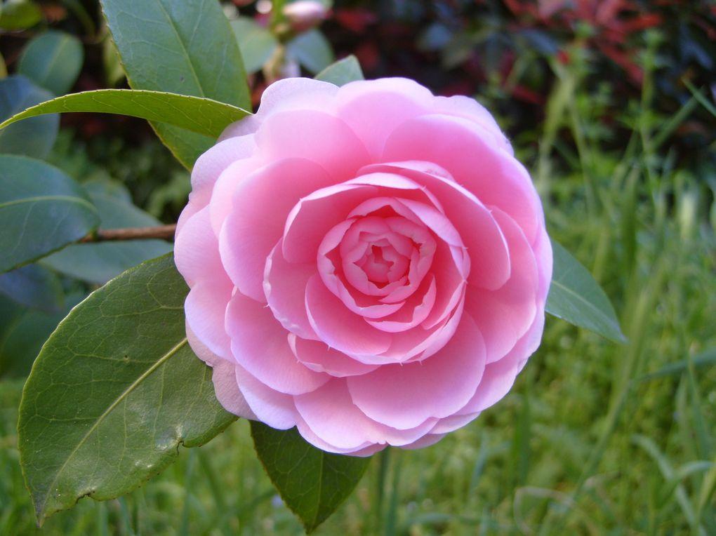 Photos que j'ai prises dans différents jardins