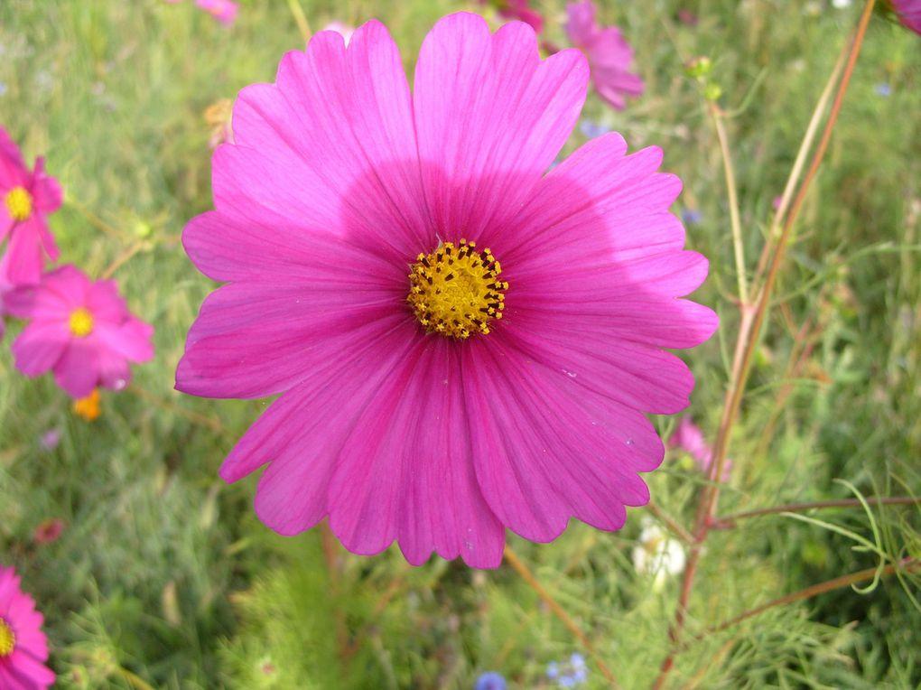 Photos que j'ai prises dans mon jardin, le jardin de mes amis ou dans des jardineries