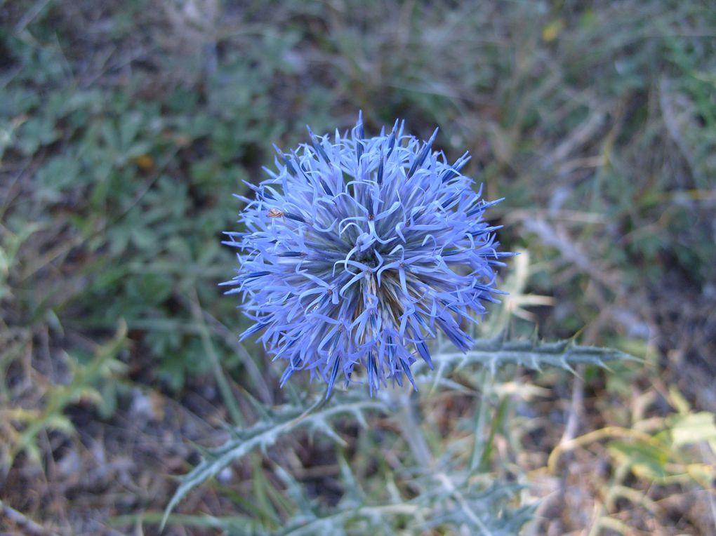 Photos que j'ai prises dans les Alpes de Haute-Provence