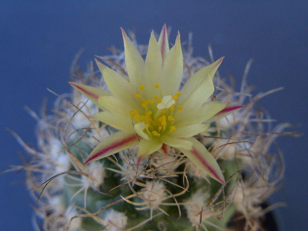 Les plus belles photos des fleurs de mes cactus