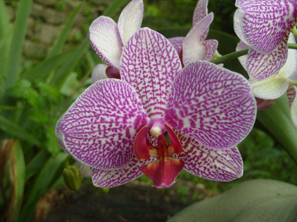 Photos de mes orchidées ou prises chez des amis ou dans des expositions