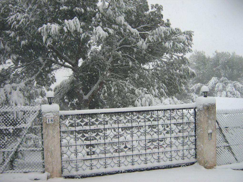Le 8 janvier 2010, nous étions sous 40 cm de neige...exceptionnel ici! beaucoup de dégâts: de grosses branches cassées, des grands arbres déracinés... mais les mésanges continuent à venir se nourrir à la mangeoire.