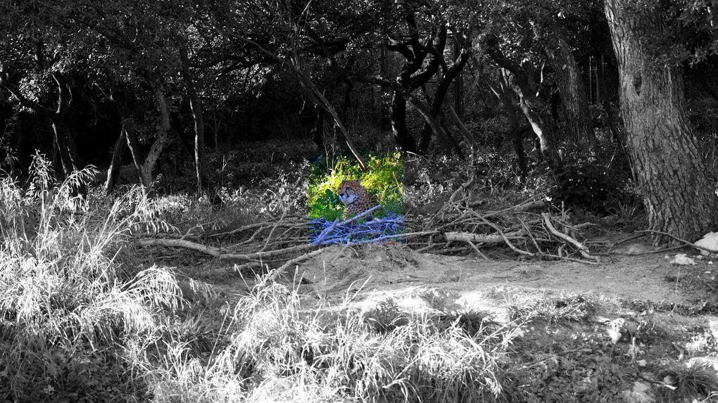 Album - Photographies