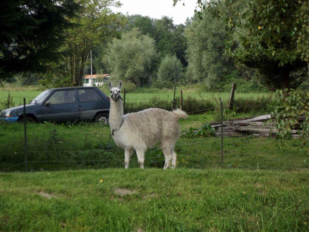 Rencontre avec des animaux de compagnies, de la ferme où des bêtes sauvages !!!