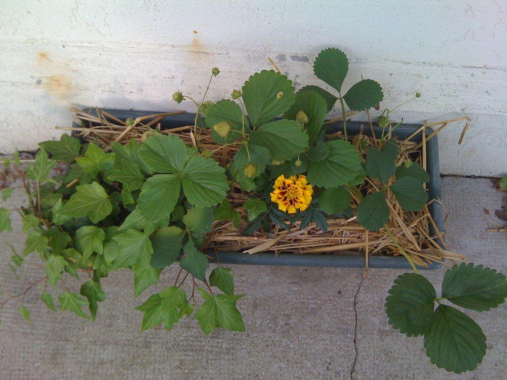 Mon petit jardin est une source extraordinaire d'émerveillement et de détente. Je l'adore ! J'y passe beaucoup de temps pour l'entretenir, l'admirer, le construire.