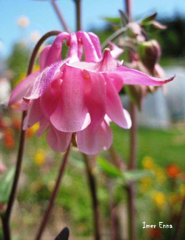 Fleurs de légumes, fleurs du jardin ou fleurs sauvages....