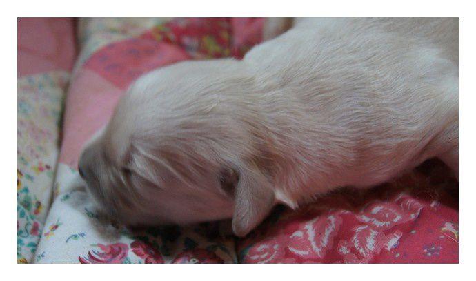 1ères photos des 7 bébés de Baloo et Chénoa nés le 29 Juin 2011