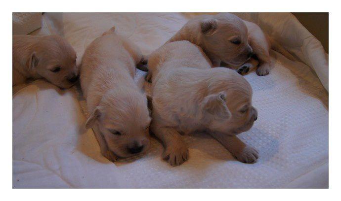 Après les bébés de Dawn et Hunter voici ceux de Honey et Benji avec les yeux grand ouverts!