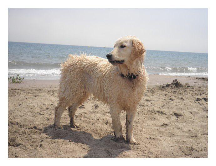 """""""Bonjour voici les dernières photos de Falbana heureuse à la plage et dans l'eau  toujours coquine et pleine d'affection"""""""