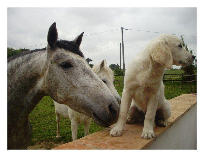 """""""Voici quelques photos d'Hilan avec ses compagnons de vie à la maison."""""""