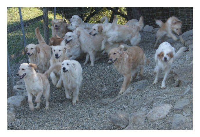 Un melting-pot de quelques-uns des chiens qui compose l'Elevage...