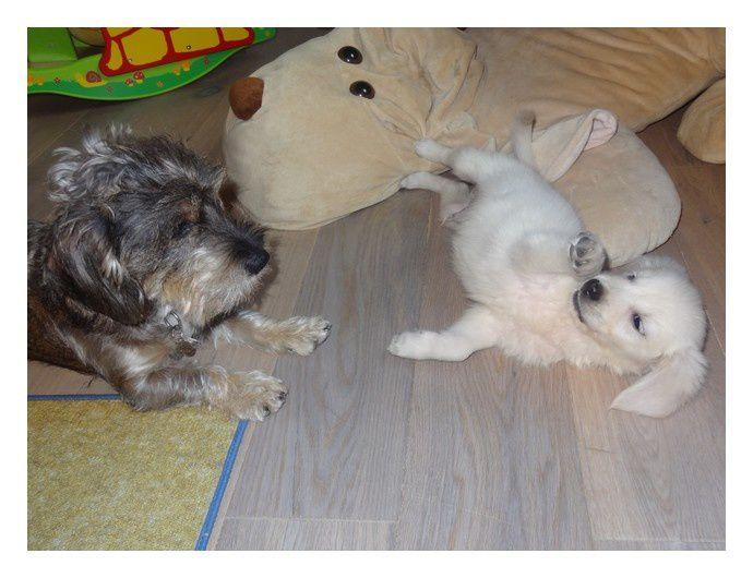 """""""Voici quelques photos de notre petit Mowgli.C'est un amour de chien. Il nous apporte que du bonheur depuis qu'il fait parti de notre famille."""""""