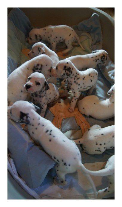 Photos des 10 bébés de Cannelle et Phoenix - Naissance 29 Juin 2011