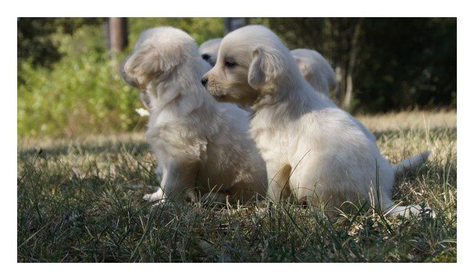 Album - PHOTOS-CHIOTS-ENOLA-ET-BALOO-5-OCTOBRE