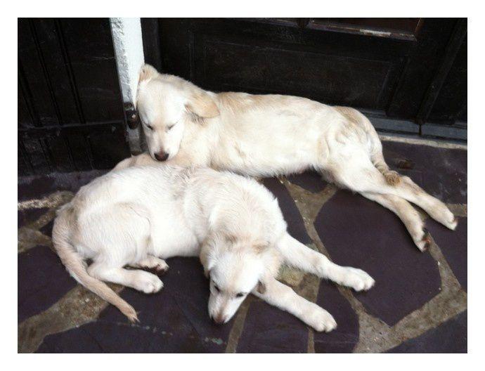 """""""Pato et Suki après une séance de course poursuite dans un parc! Unebonne gorgée d'eau et vive la sieste qui s'annonce!"""""""