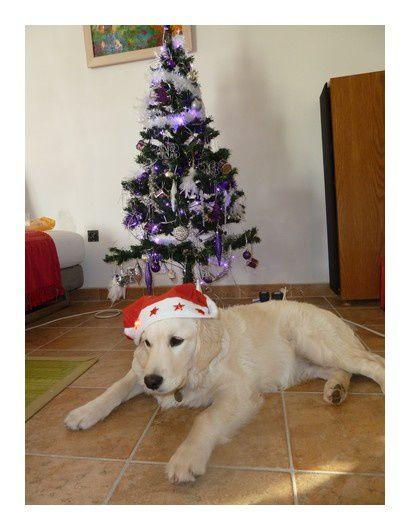 Talgo grandit très bien et se porte à merveille. Il vous envoie en notre compagnie pleins de bisous pour ces fêtes de fin d'année.
