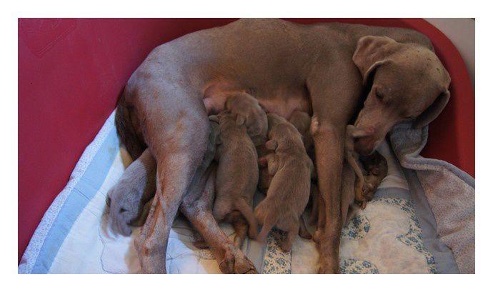 1ères photos des bébés de Dawn et Hunter