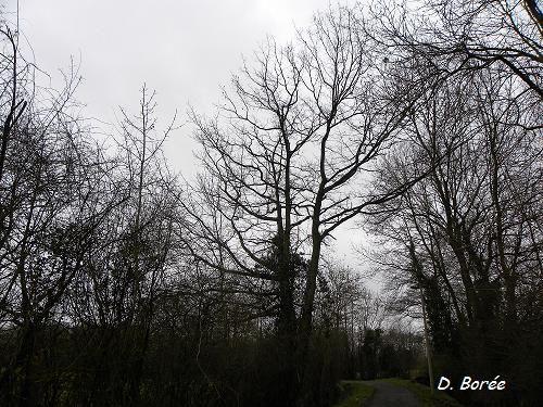 Album - Photos-automne-hiver-2012-2013