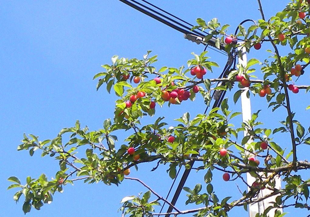 Album - Photos-ete-automne-2011