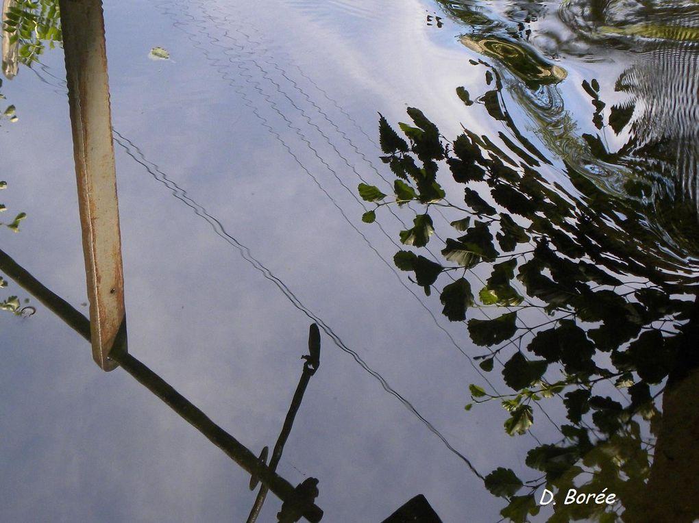 Album - Photos-printemps-ete-2012