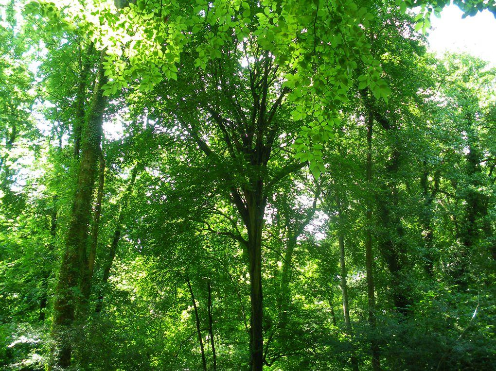 Album - Forêt de Boisemont (95)