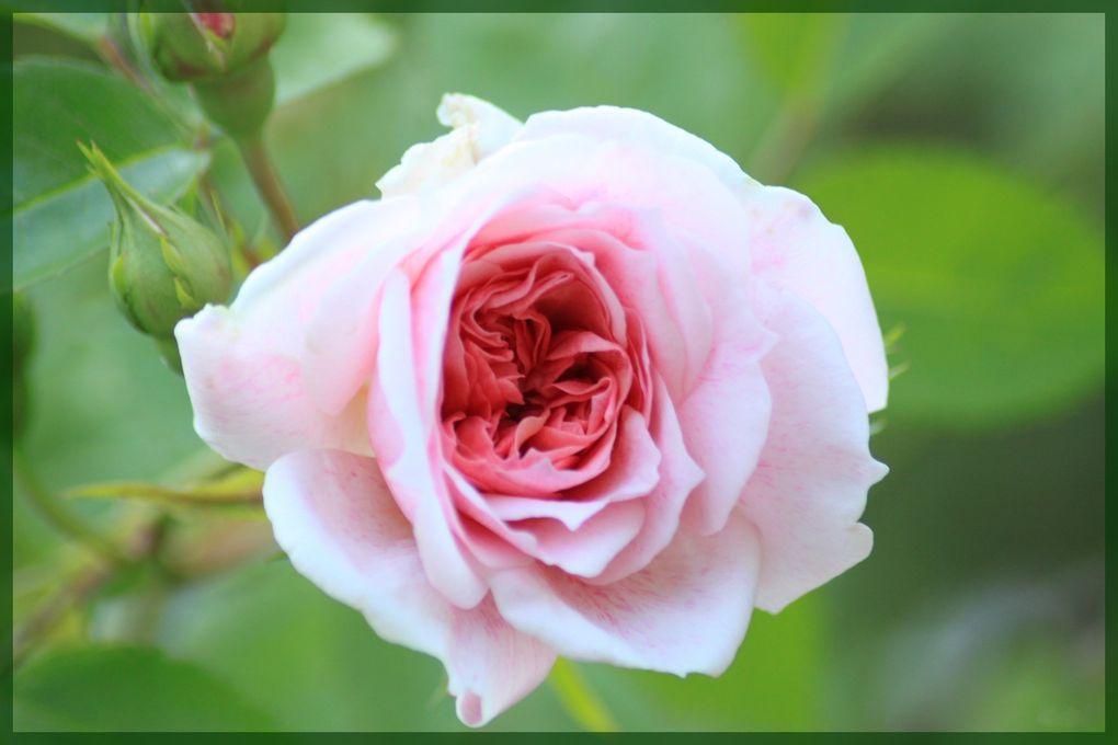 Album - fleur