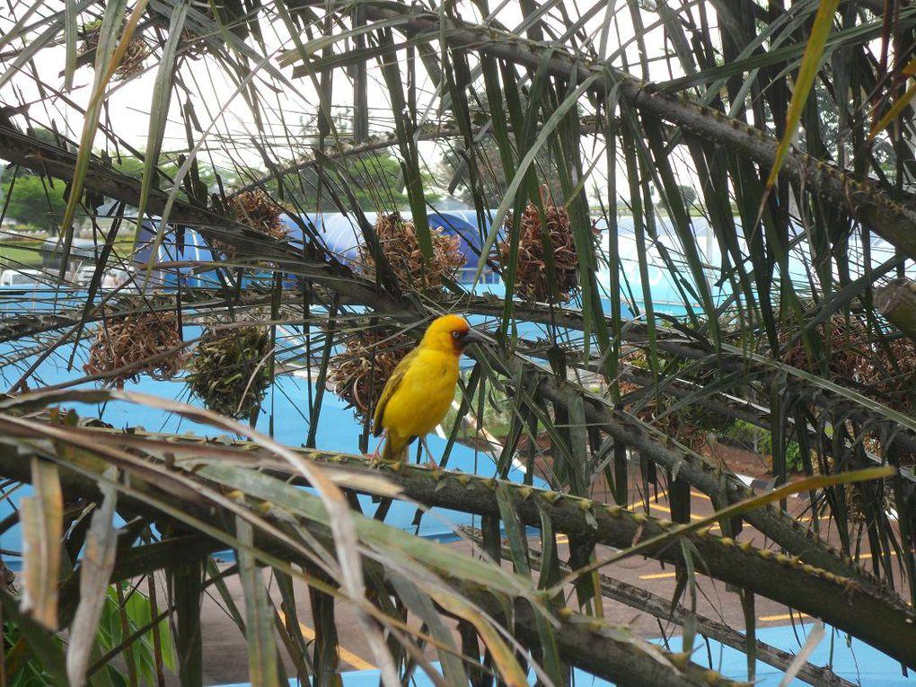 Tamatave, Île Ste Marie, Tana