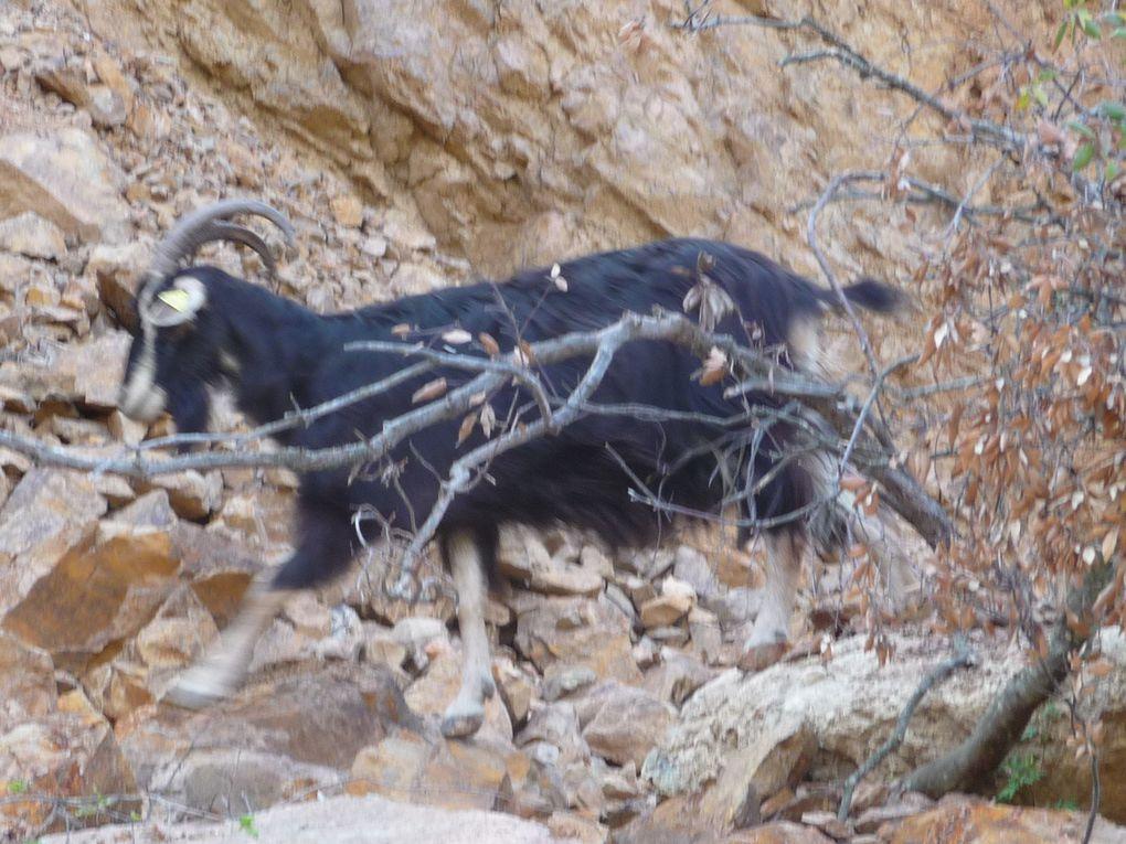 Suite des Cent Cols en Haute Corse