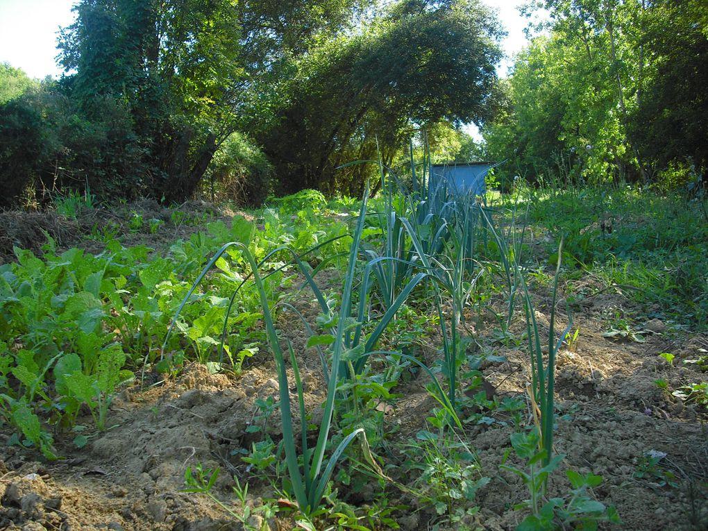 Parterres, plates-bandes, buttes et champs épanouissent leurs formes au fil des saisons hiver, printemps...