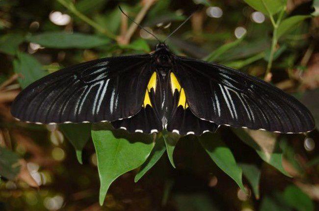 Album - Lovely butterflies