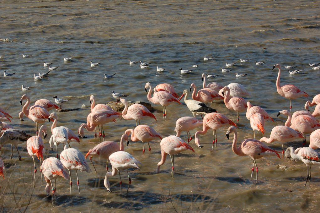 Photos prises lors d'une visite à la réserve africaine de Sigean et sur les bords de la mer Méditerranée.