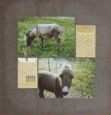 Album - Nos-animaux