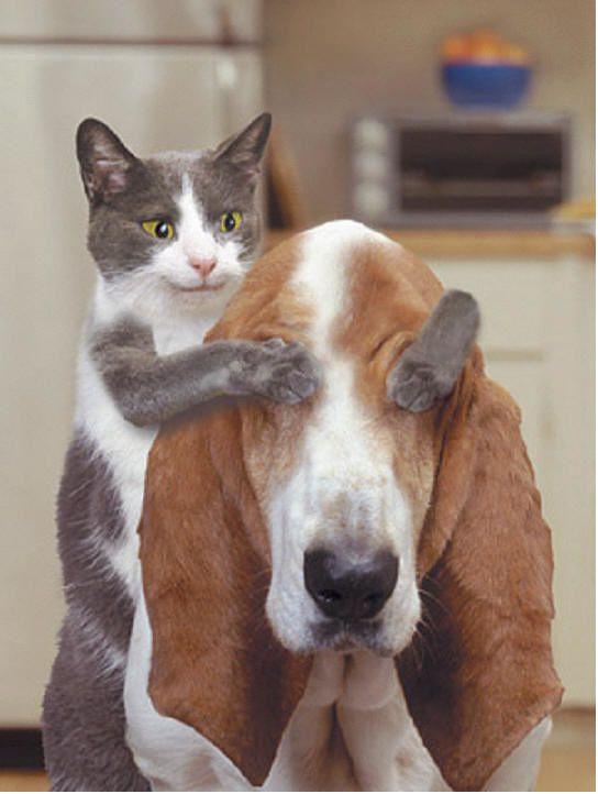 On se marre avec les animaux.