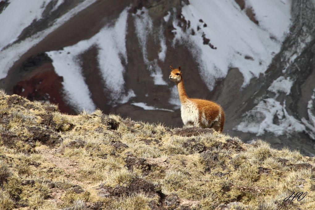 Bolivia 2012