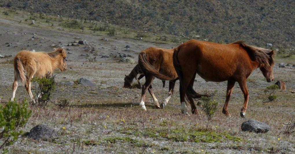 Ecuador 2010