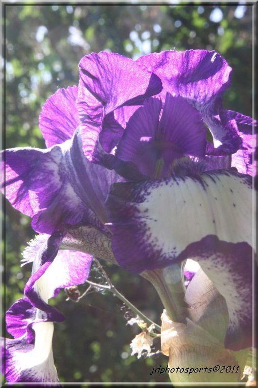 fleurs de l'artouillat