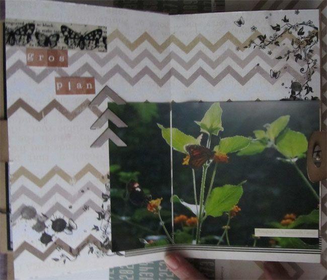Album - Au coeur de la jungle
