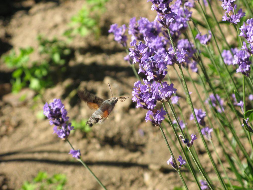 Album - les-fleurs-de-mon-jardin