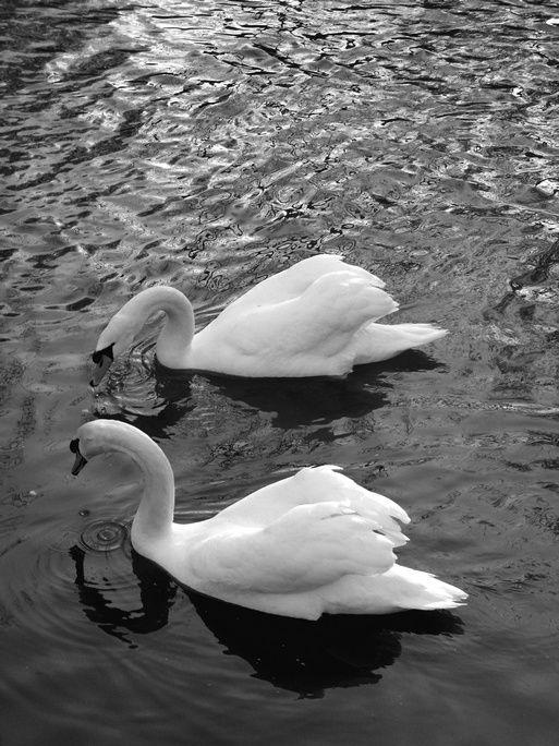 Album - Photos-noir-et-blanc