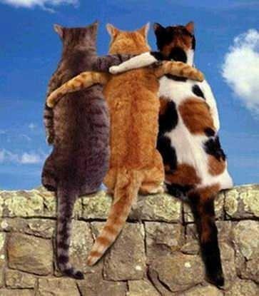 Album - Nos amis les Bêtes