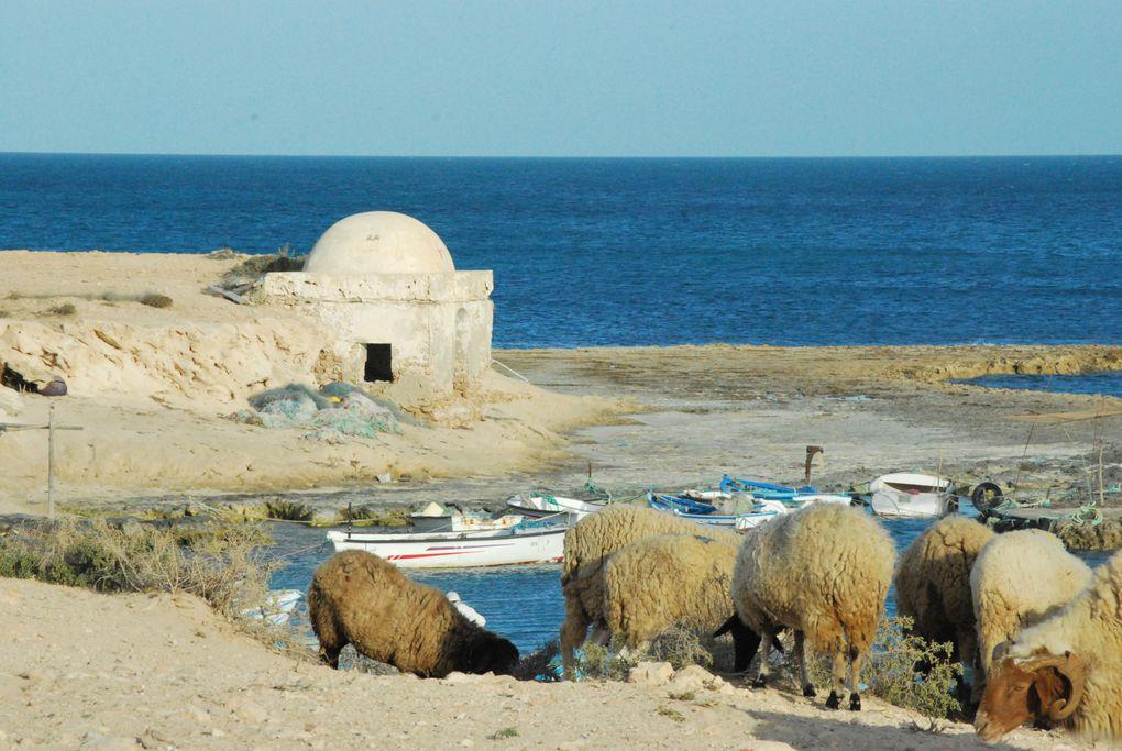Au sud de la Tunisie, ZARZIS, DJERBA, DJERIA et bien d'autres lieux