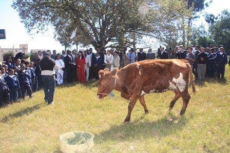 Pour la fête des Mères 2010, l'association FITIA a offert des divers cadeaux et une vache laitière aux 53 orphelins du centre de la Police Nationale à Ambatolampy.