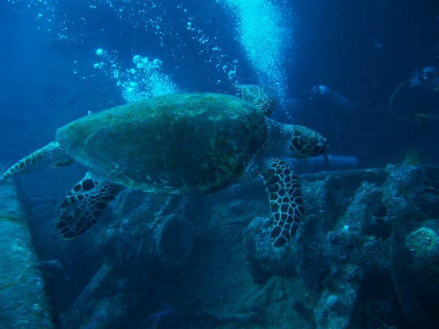 Album - marine-park-2012-egypte