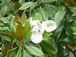 Belles images de fleurs du jardin