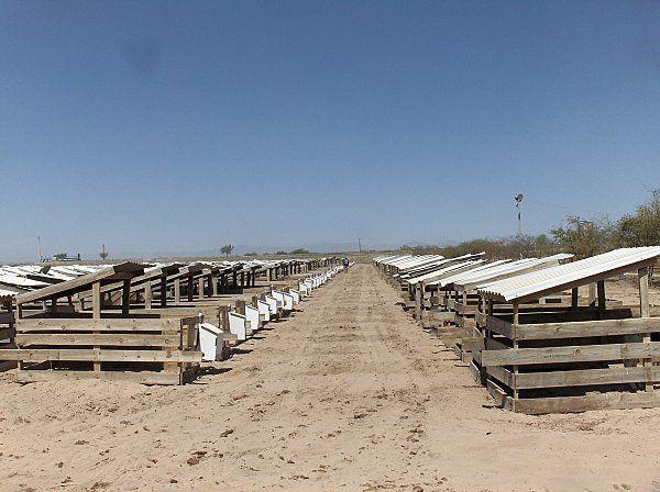 """batiments grands troupeaux du nord de l""""europe vus en juin 2010  TPA  Rotos intérieurs et extérieurs"""