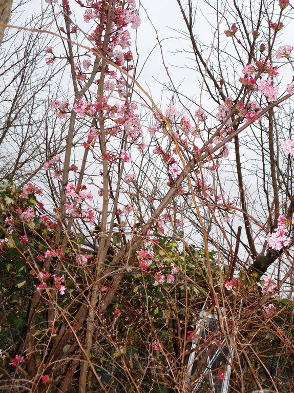 Album - le-clos-fleuri-en-fevrier