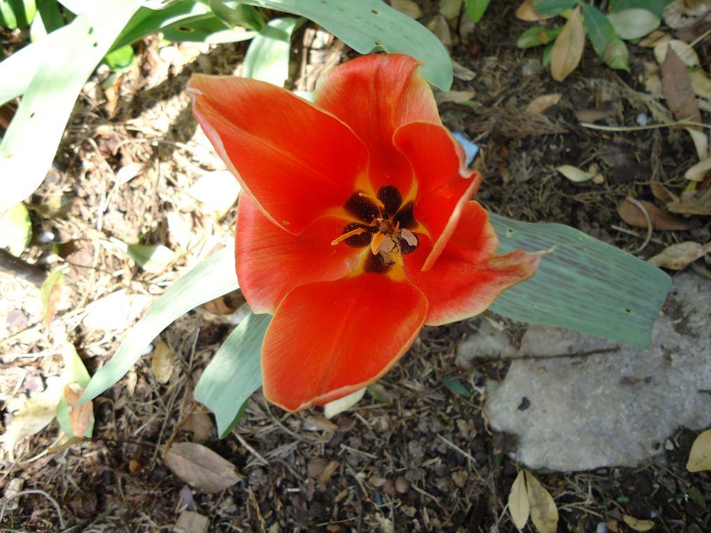 Album - le-clos-fleuri-en-mars